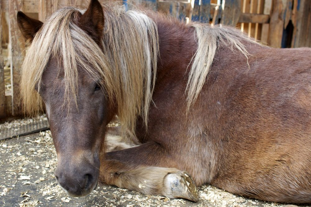 Adopt a rescued pony