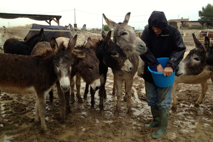 Easy Horse Care Rescue Centre co-founder Rod Weeding feeding a herd of donkeys in the winter mud.