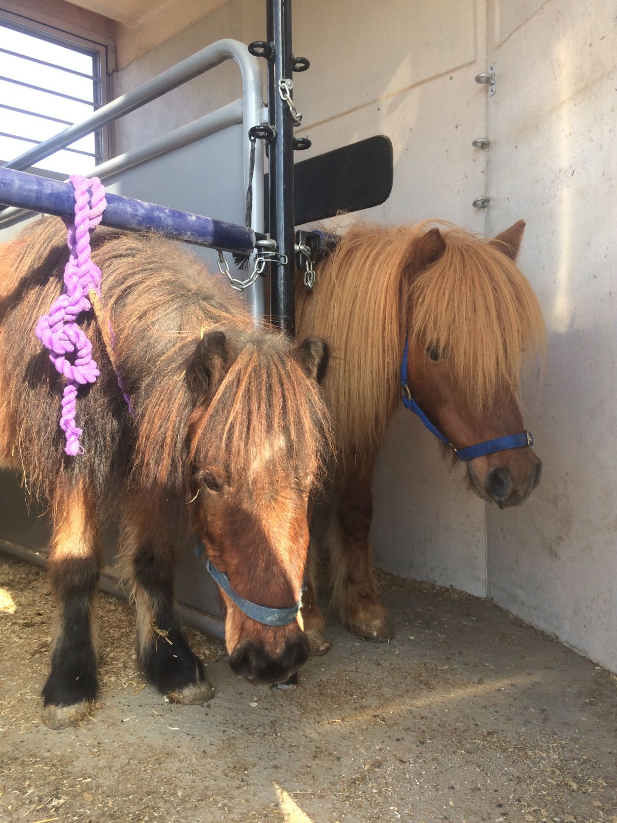Two ponies rescued on December 27 2016