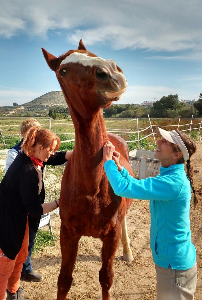 Instructor Susanna Tuisku and participant Gillian Hughes work on George during the March 2017 equine shiatsu course