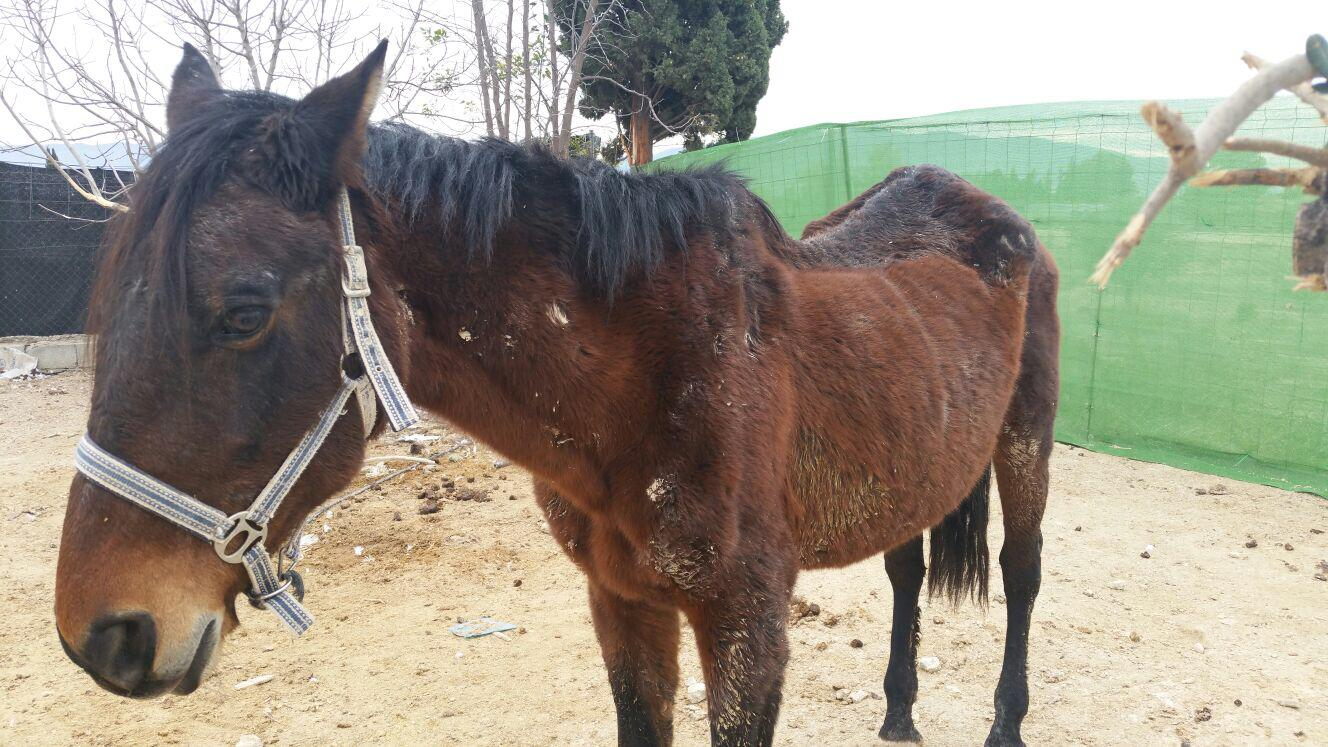 Mare rescued February 15 2018