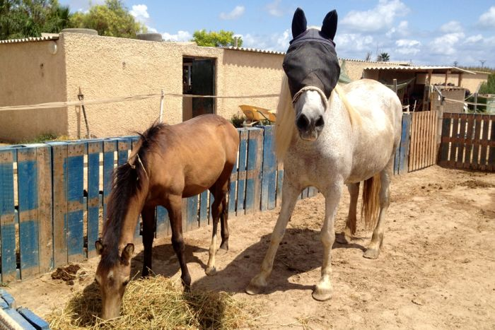 A rescued mare and foal at the Easy Horse Care Rescue Centre