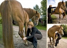Equine Shiatsu Introductory Course