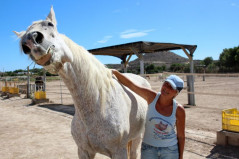Watch the Easy Horse Care Rescue Centre documentary