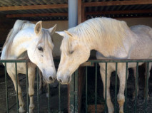 Two of our rescued horses