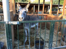 Braveheart the donkey after being rescued by the Easy Horse Care Rescue Centre.