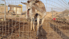 Malnourished donkey seized by police in animal neglect case