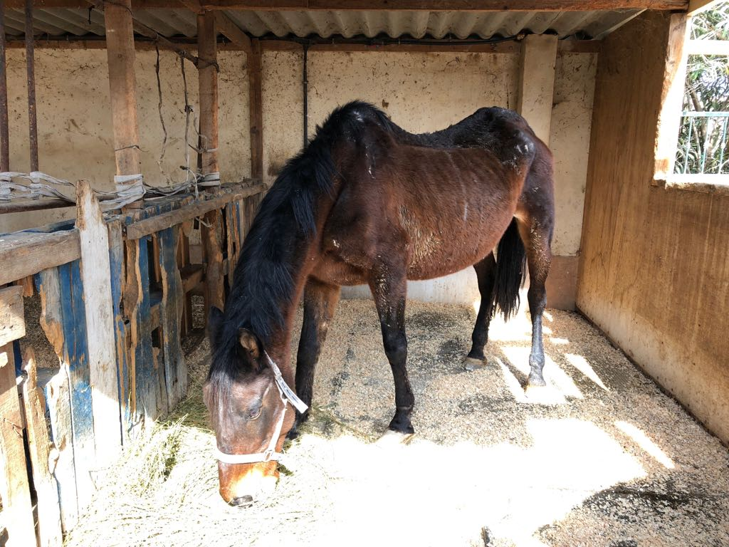 Mare rescued 15 February 2018