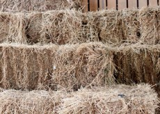Buy a bale of hay